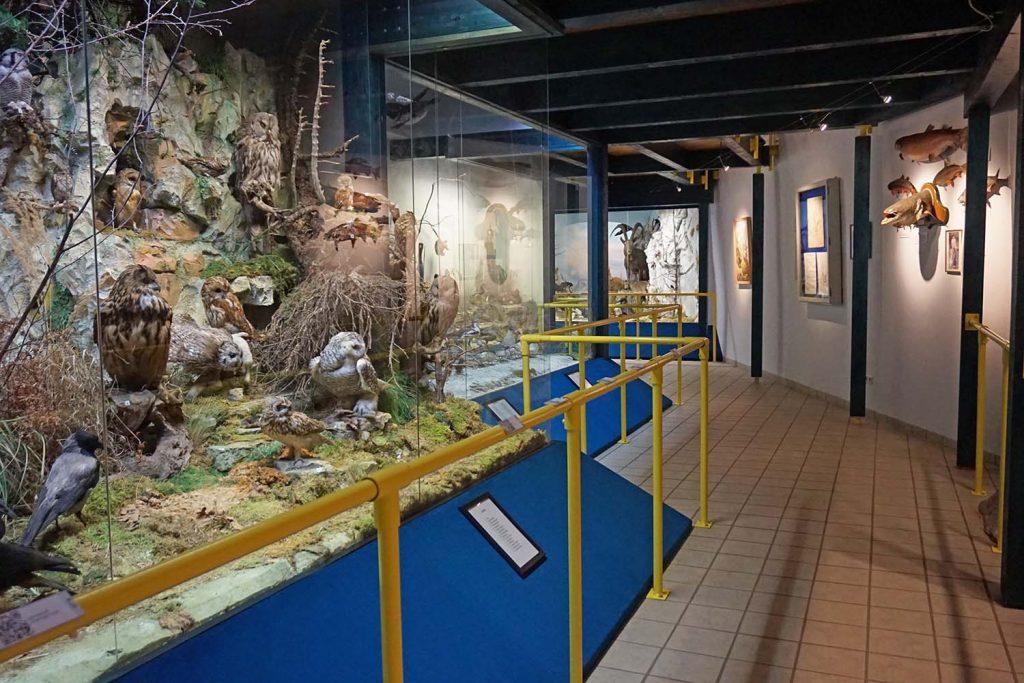 Naturmuseum Neuberg